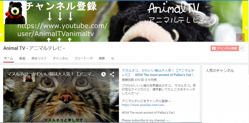 animalTVからのお知らせ