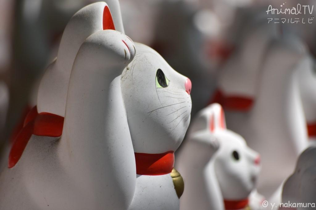 Welcoming cat, Maneki-neko in Tokyo, Japan