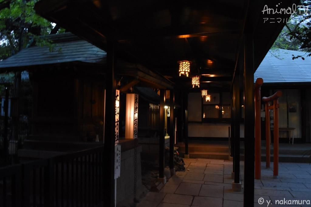 Japanese Shrine in Tokyo, Japan