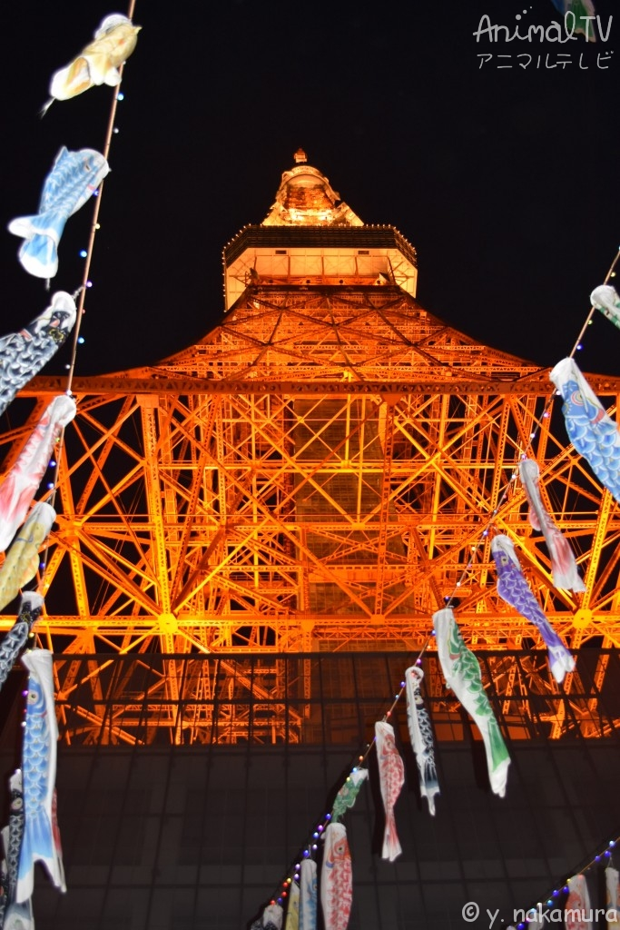 Carp-shaped streamers in end of April to early May at Tokyo Tower, Japan