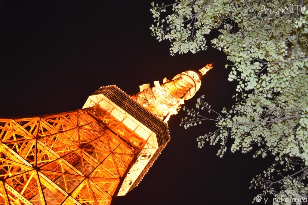 Tokyo Tower in Japan