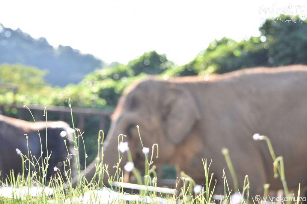 友だち同士のゾウ、仲良し_5