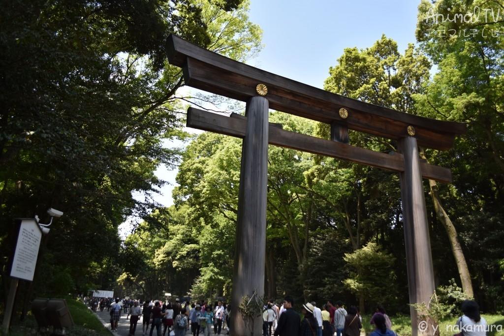 Meiji-jingu Shrine, Buddhism in Japan_2
