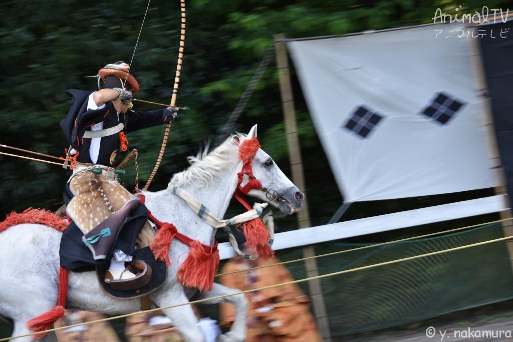 Horseback archery of Japanese Samurai Culture