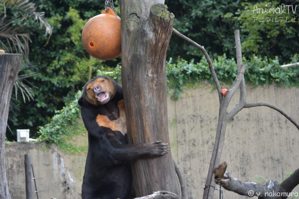 木に登って、隠し財産を見つける、なんだか幸せ
