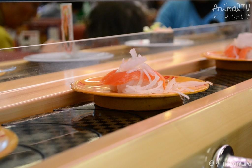 sushi train in Japan