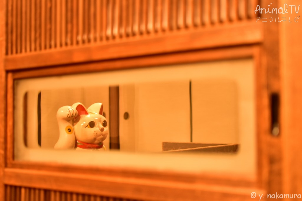 Happy cat in Japanese room