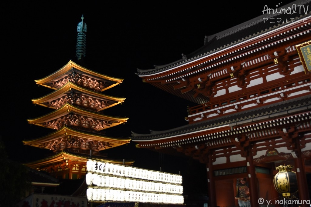 "The oldest temple in Tokyo is ""Sensoji Temple"" in Japan"